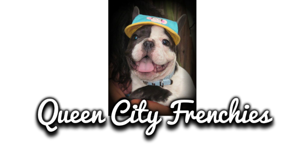 Queen City Frenchies